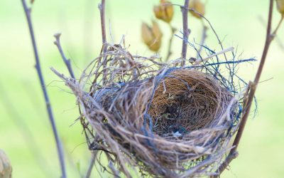Experiencing 'empty nest' syndrome? Have you thought about fostering?
